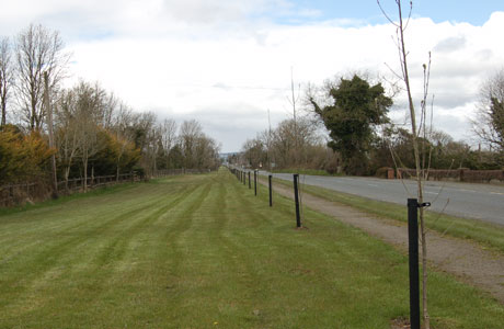 Ballymahon Road Trees Planted